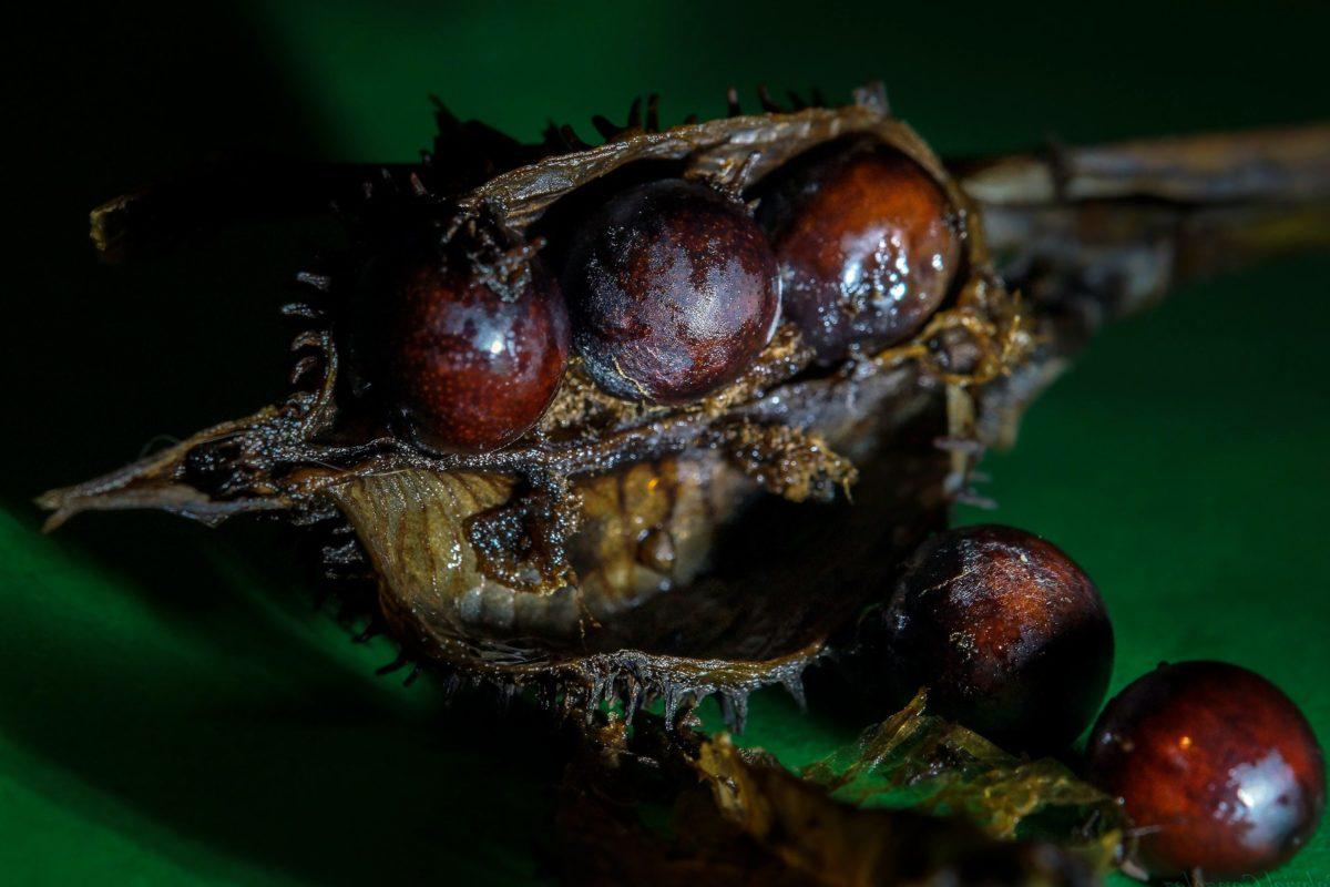 ด้วง, ตา, รายละเอียด, arthropod, สันหลัง, เงา, แมลง