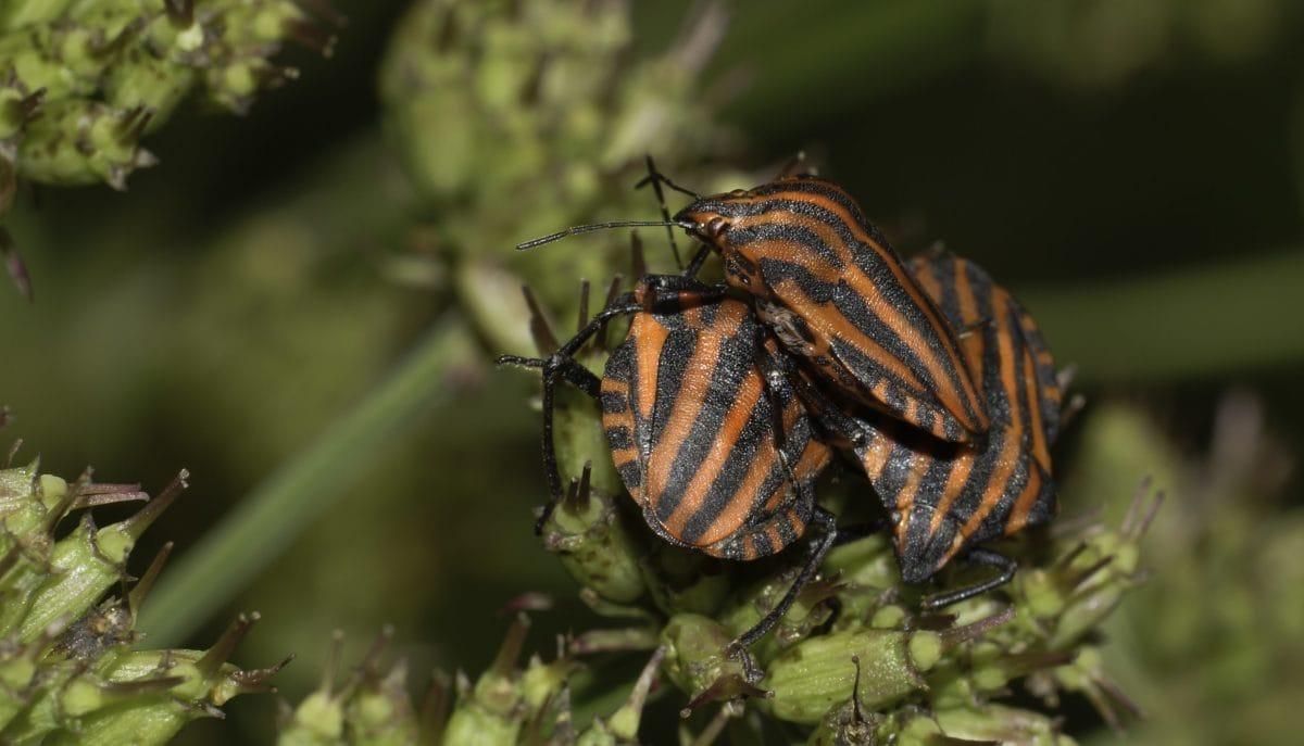 дива природа, безгръбначни, насекоми, природа, червен бръмбар, членестоноги, дневна светлина