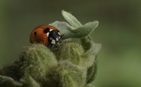 insect, ladybug, nature, beetle, arthropod, red bug, plant, green leaf