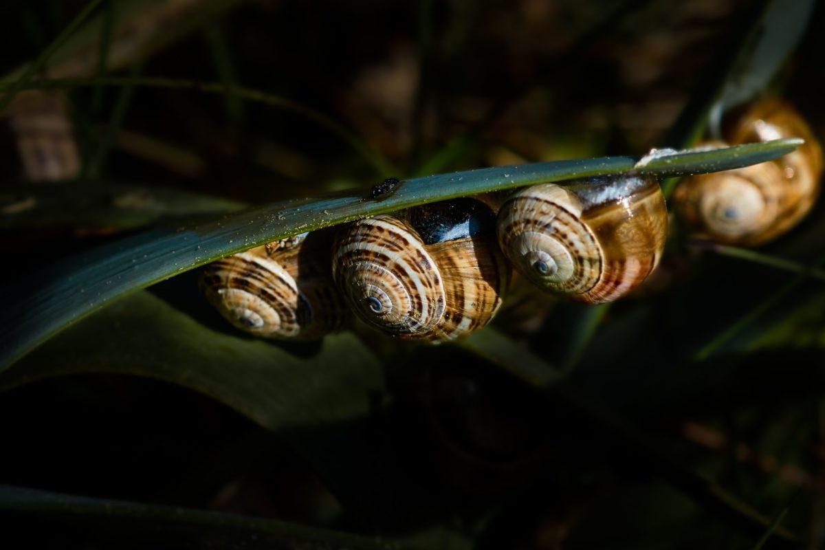 invertebrate, snail, insect, garden, nature, gastropod, animal
