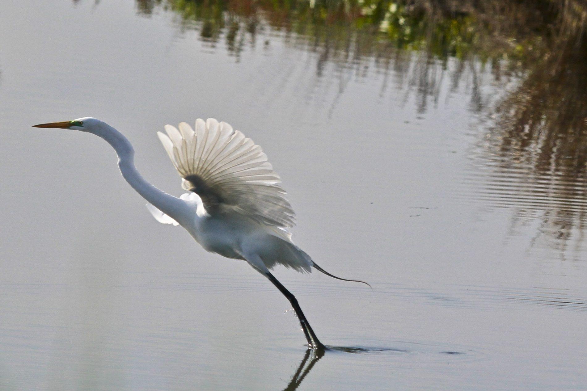 Aká je veľkosť veľkého vtáka