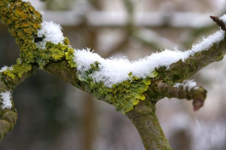 garden, wood, nature, winter, leaf, branch, tree, snow, frost, ice