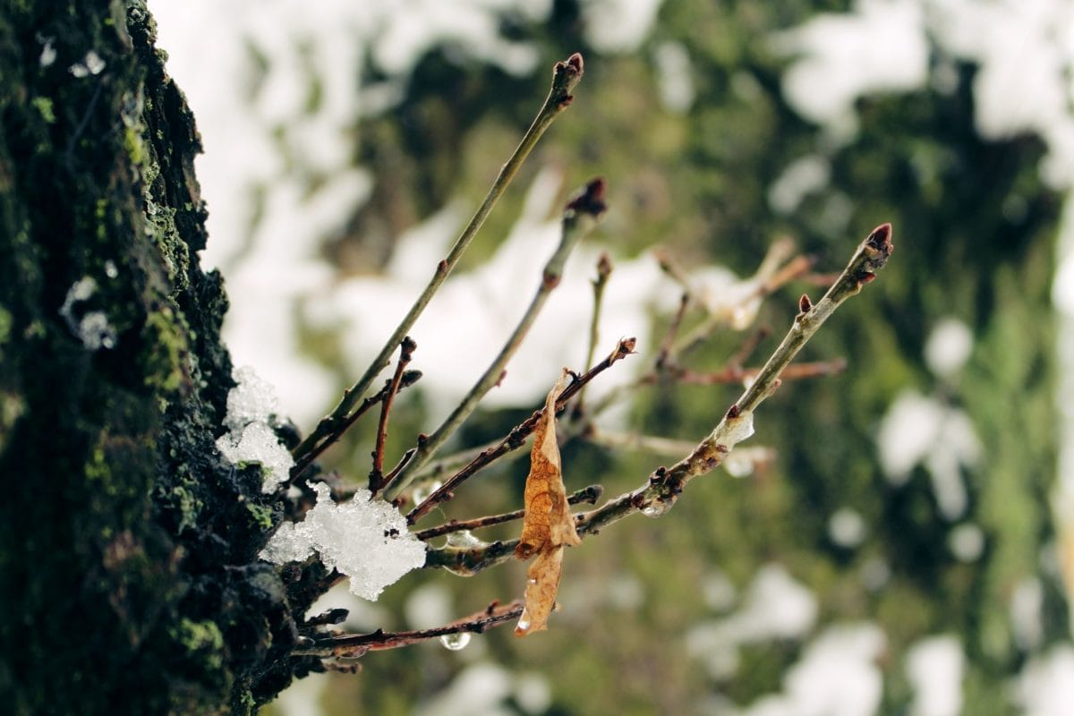 garden, nature, leaf, branch, tree, tree bark, outdoor