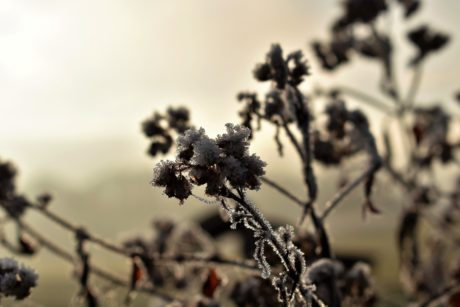 tree, nature, flower, plant, sky, outdoor, frost, dusk, shadow