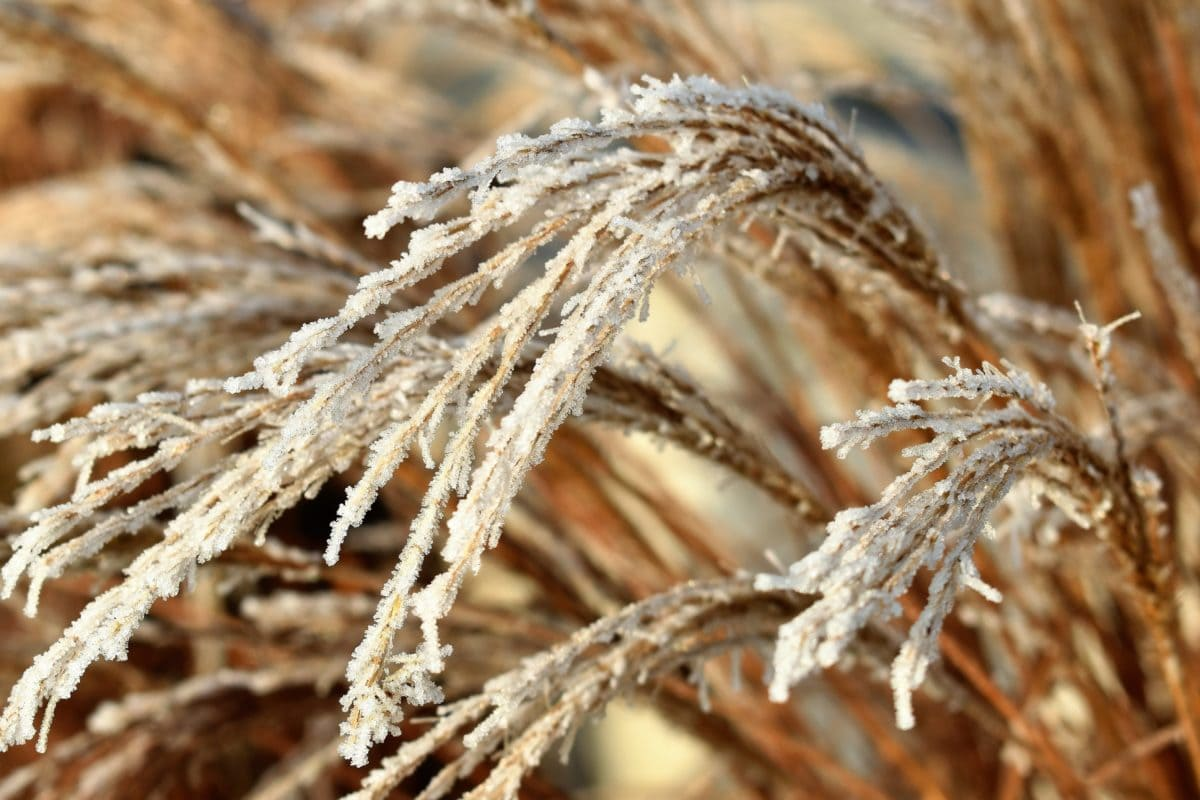 nature, daylight, winter, agriculture, cereal, field