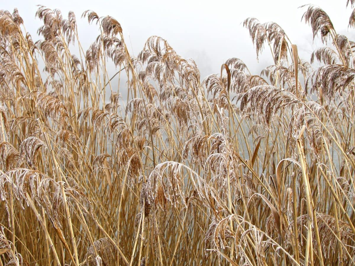 summer, seed, cereal, straw, frost, winter, countryside, field