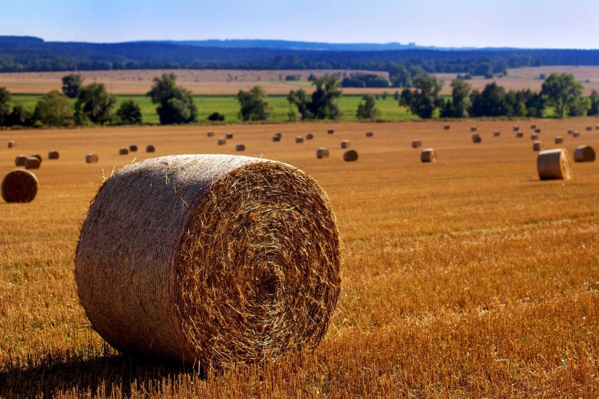 straw, landscape, countryside, agriculture, field, haystack, summer