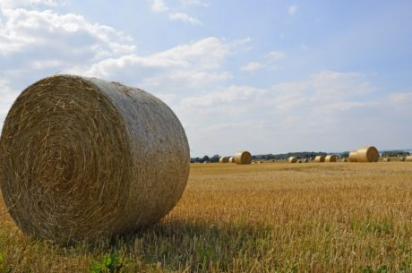 countryside, cereal, field, haystack, blue sky, landscape, straw, agriculture