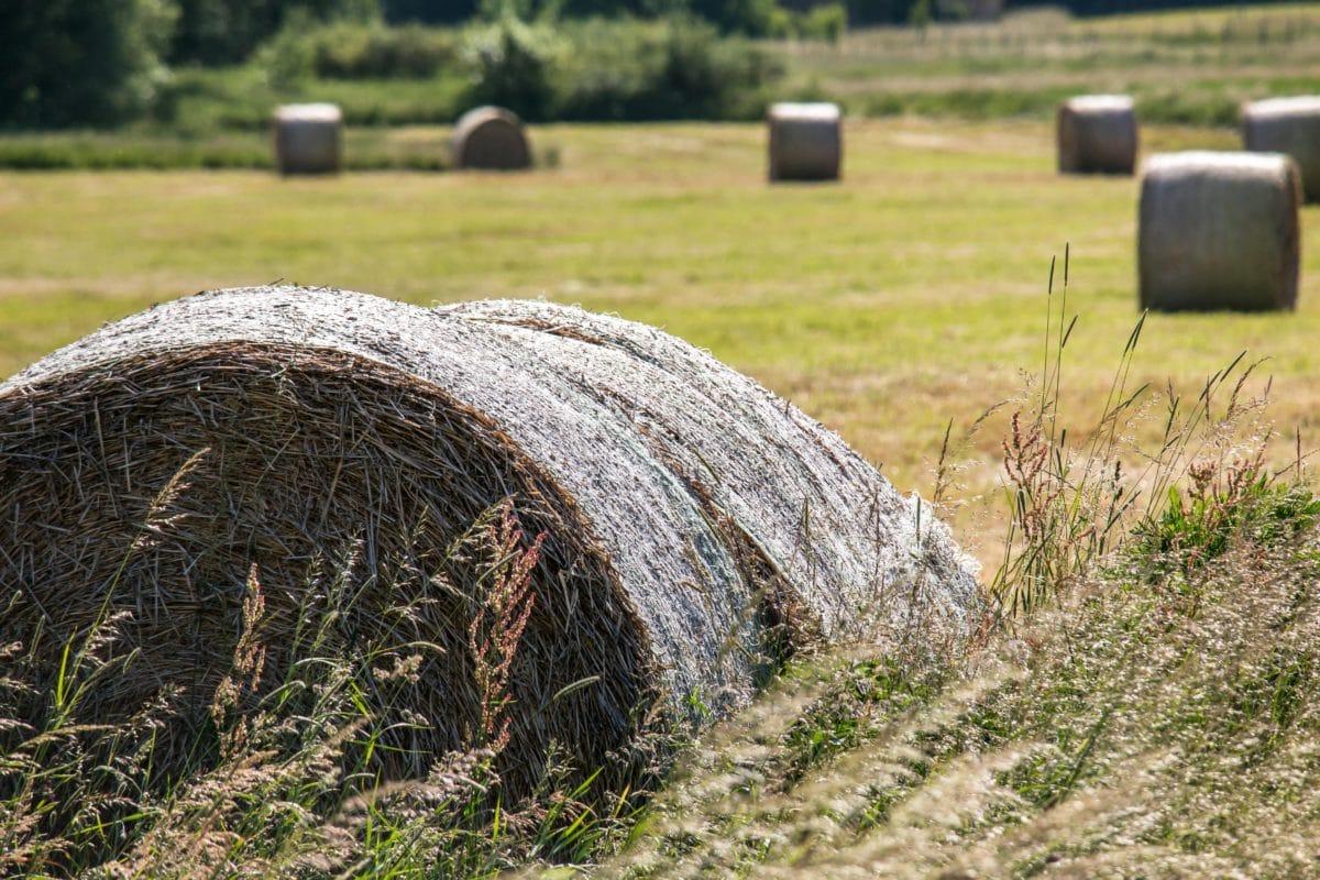 άχυρα, χωράφι, γεωργία, εξοχή, άχυρο, γρασίδι, τοπίο, φύση