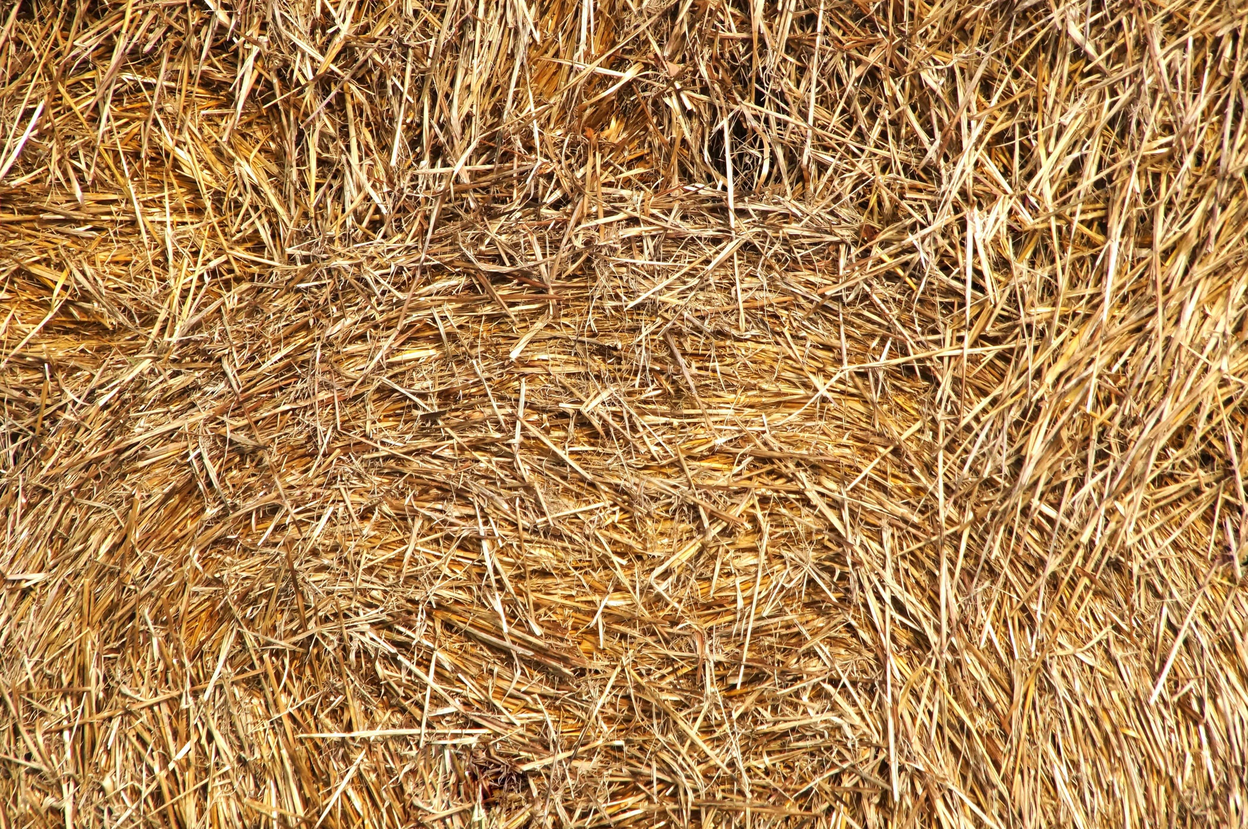 Free Picture Detail Dry Haystack Pattern Straw