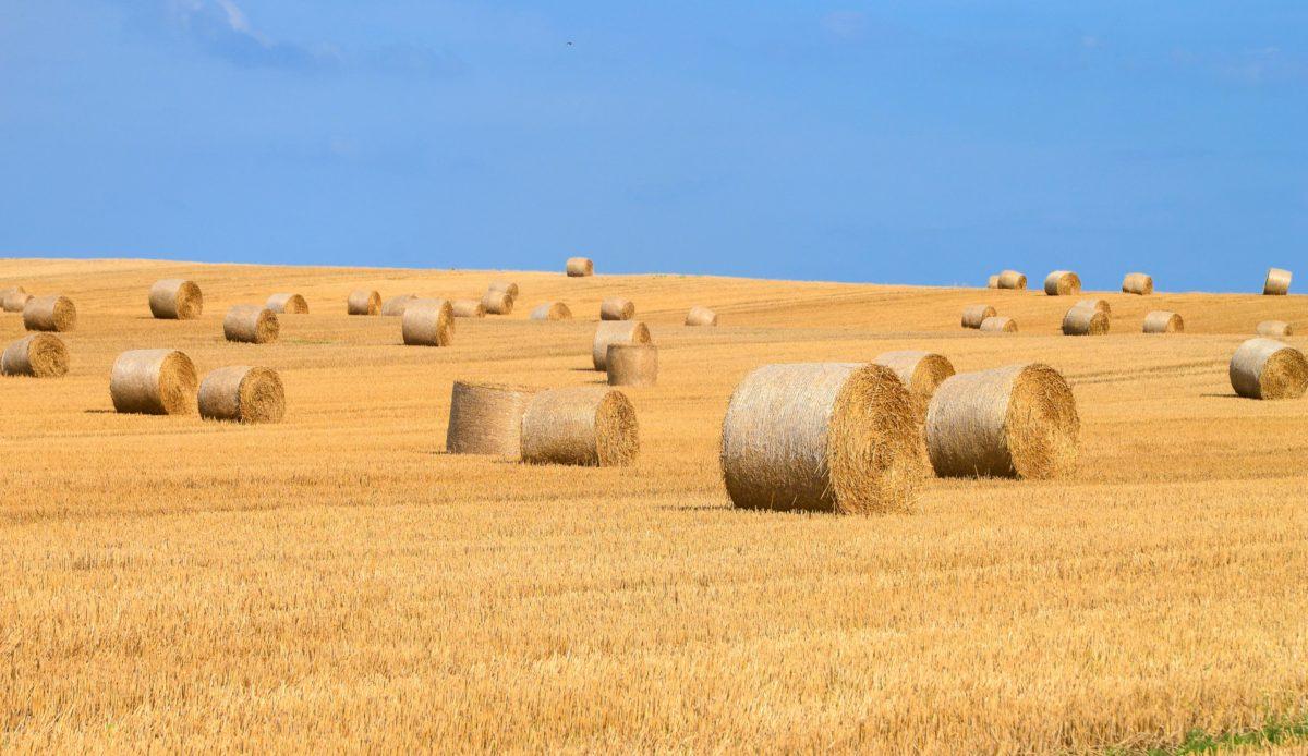 εξοχή, ξηρά, γεωργία, άχυρο, χωράφι, άχυρα, μπλε ουρανός
