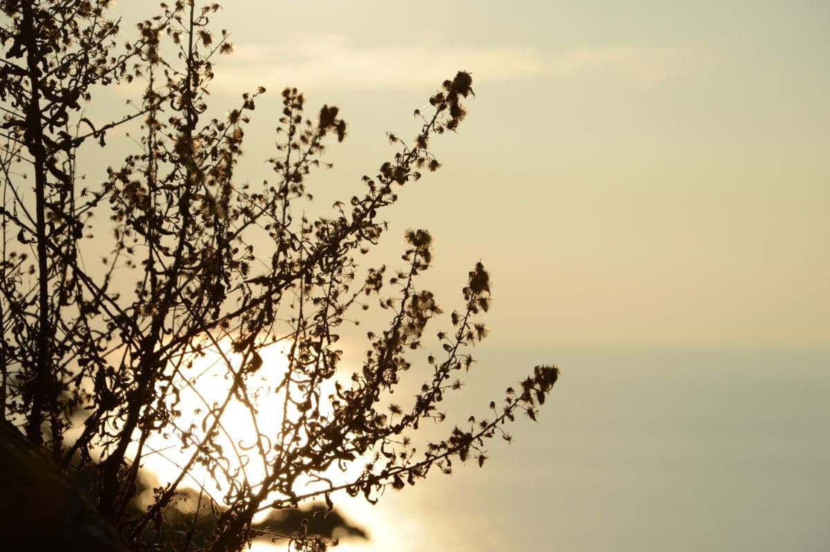 tree, sky, silhouette, shadow, nature, dawn, winter, branch, outdoor