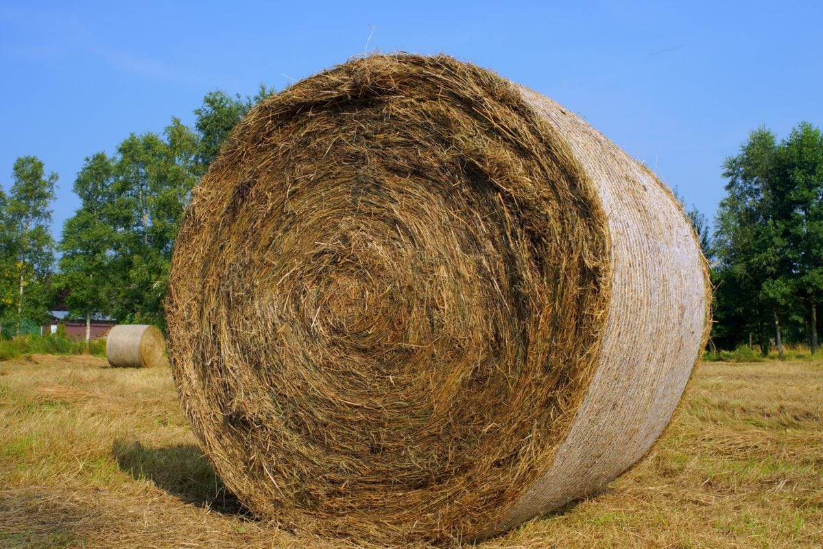 haystack, field, field, blue sky, agriculture, straw, landscape