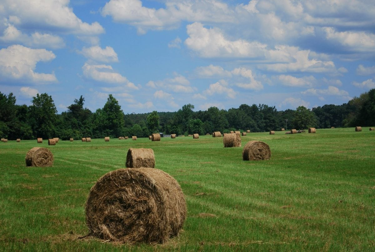 landscape, straw, haystack, meadow, agriculture, field, grass, countryside