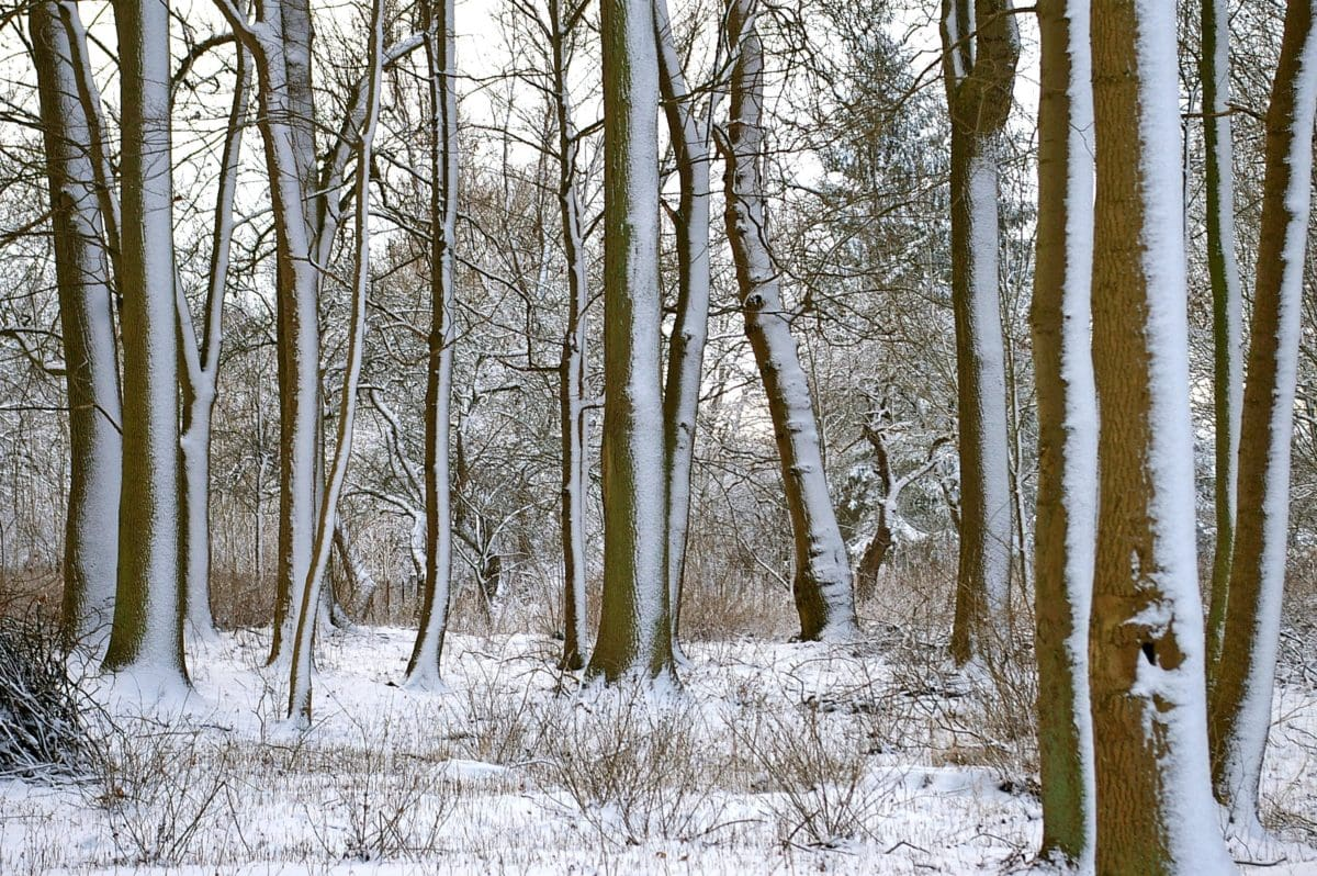 landscape, tree, winter, cold, wood, snow, nature, frost, forest