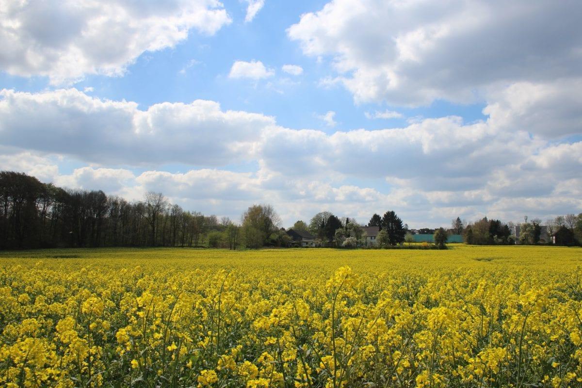 krajobraz, natura, krajobraz, rolnictwo, pole, rzepak, Błękitne niebo, Chmura
