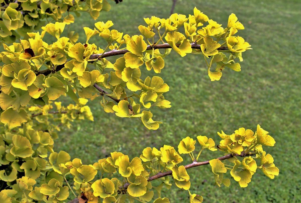keř, příroda, list, žlutý květ, strom, rostlina, bylina, pole