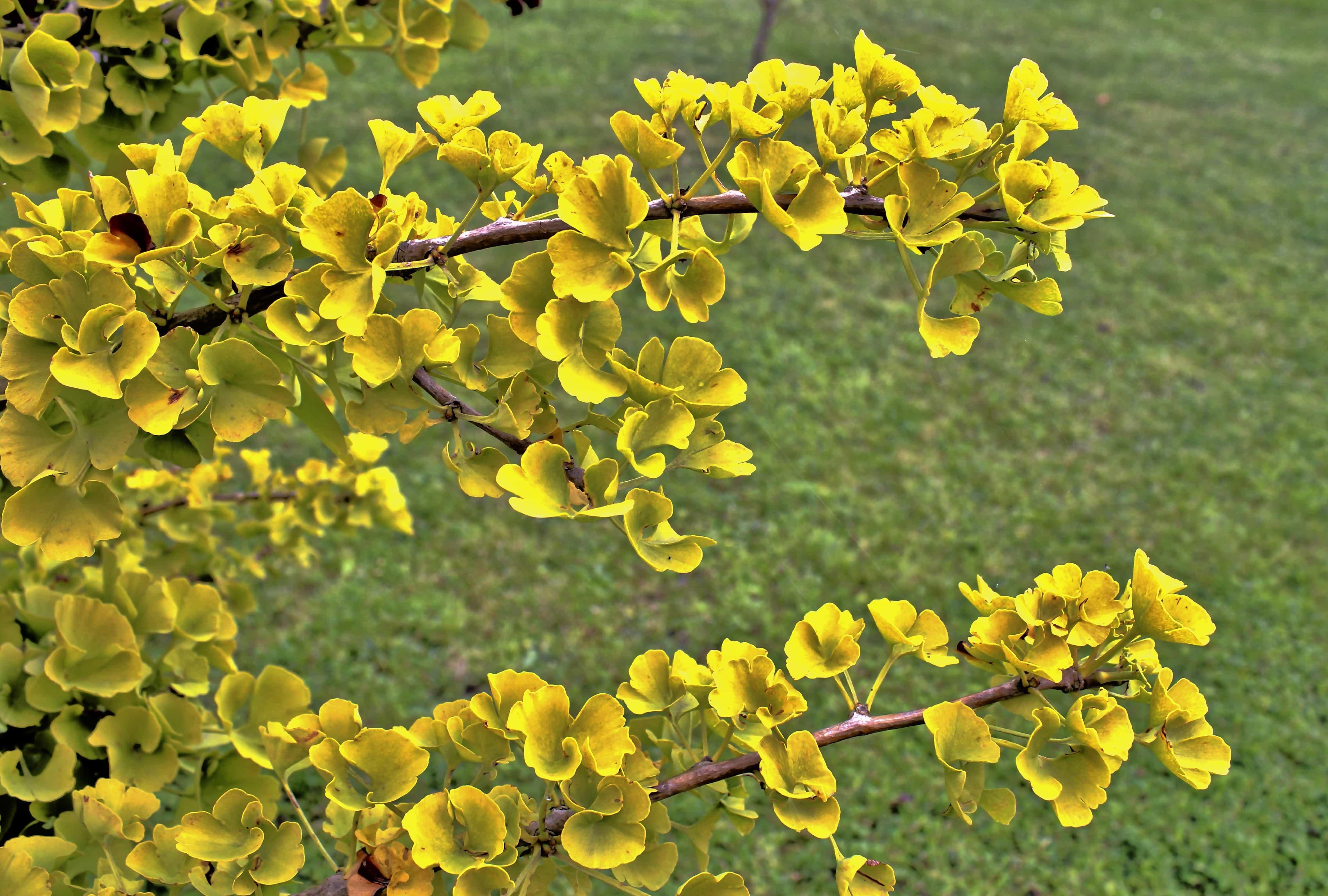 Cespuglio Fiori Gialli.Foto Gratis Arbusto Natura Foglia Fiore Giallo Albero Pianta