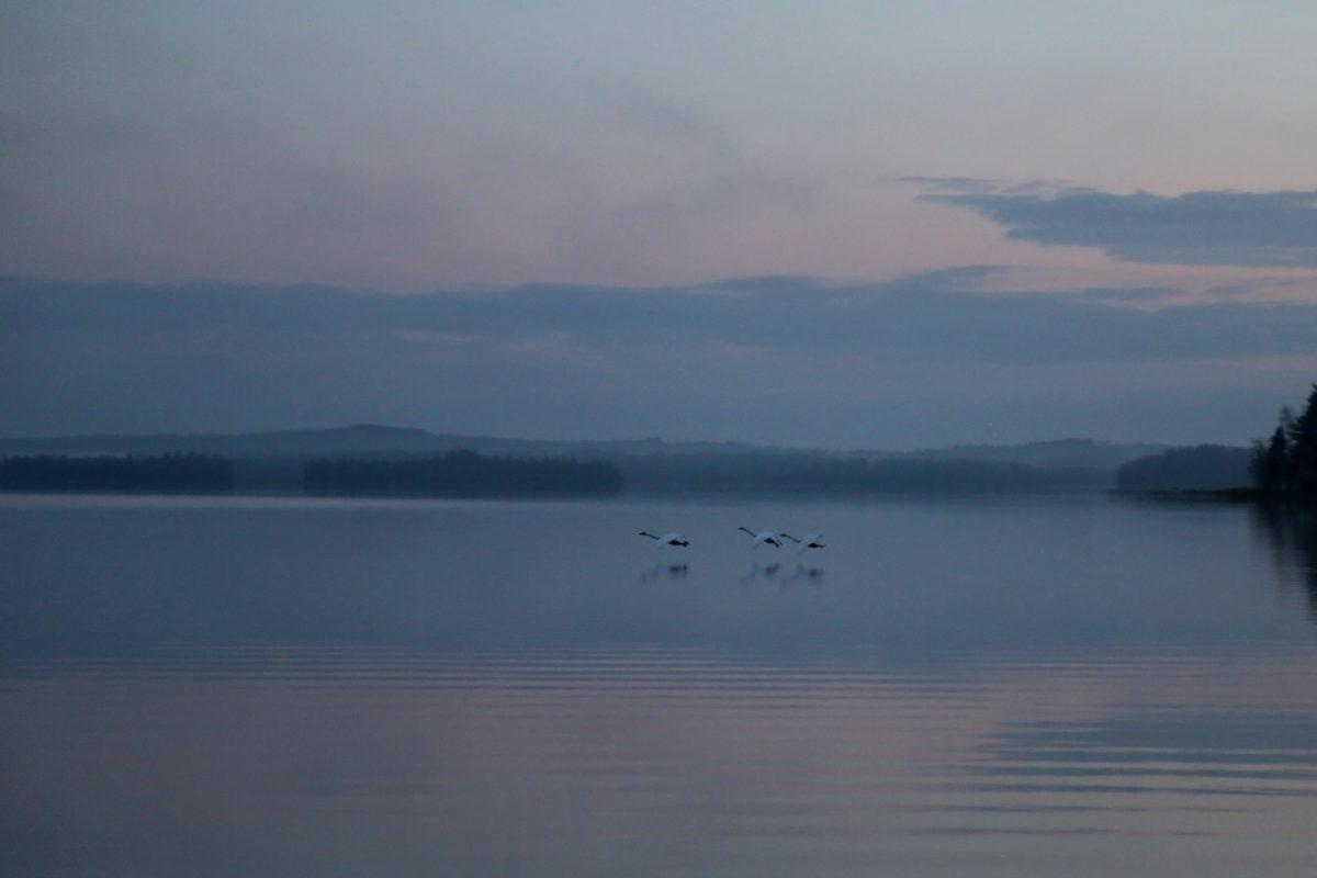 reflection, sea, fog, sunset, landscape, water, dawn, ocean, dusk