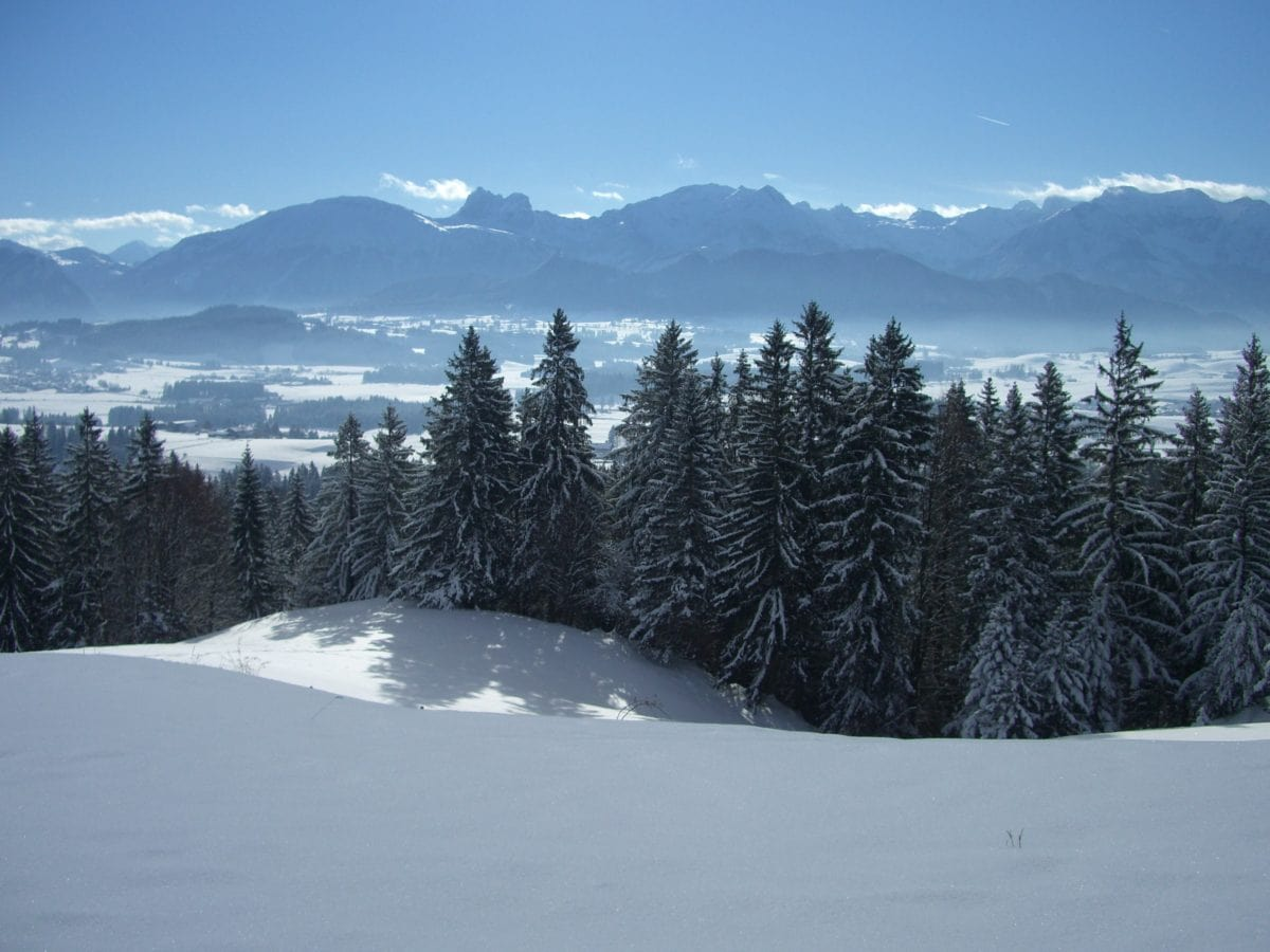 wood, cold, winter, mountain, evergreen, snow, landscape, blue sky