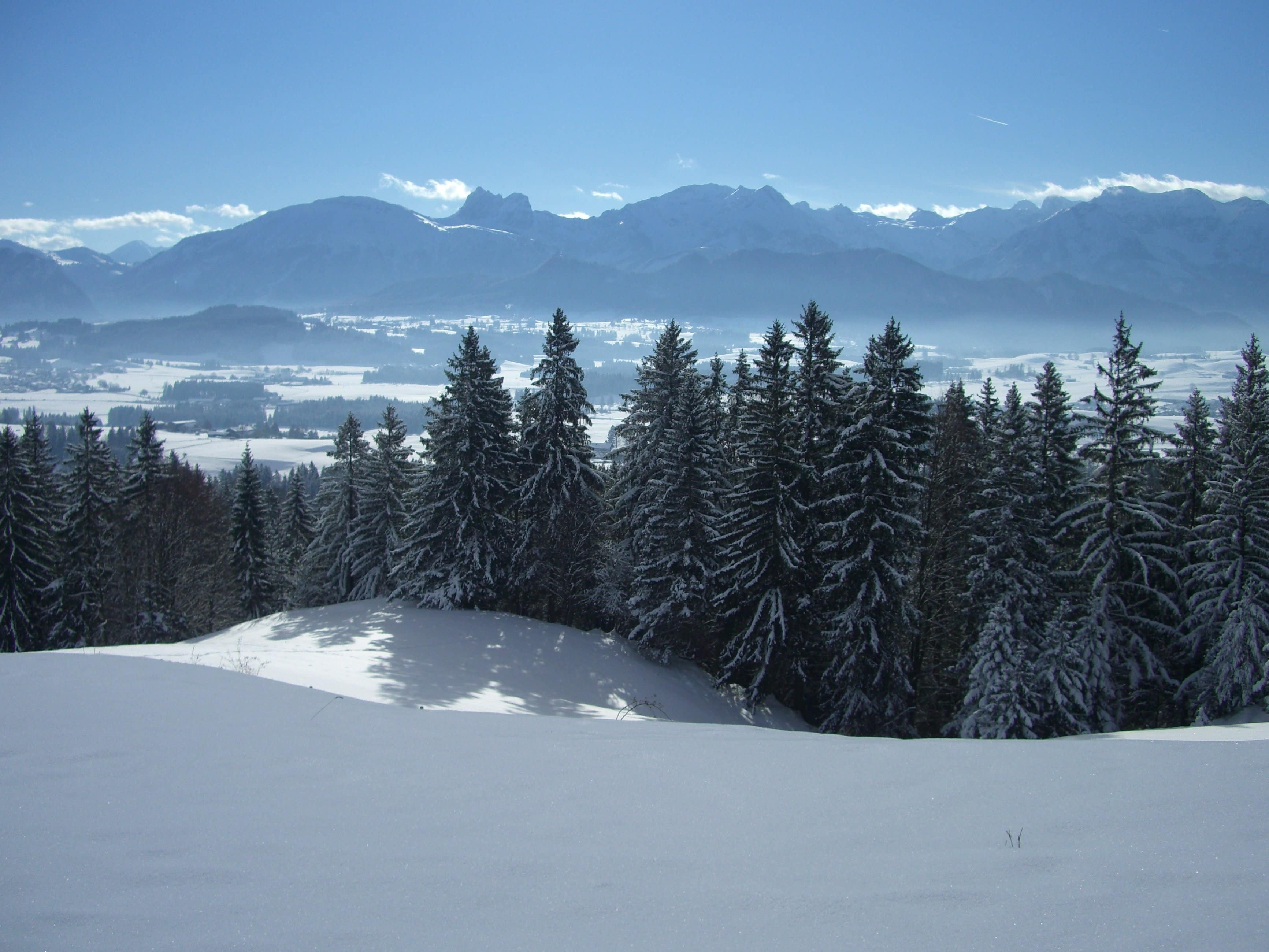 Free picture: wood, cold, winter, mountain, evergreen ...