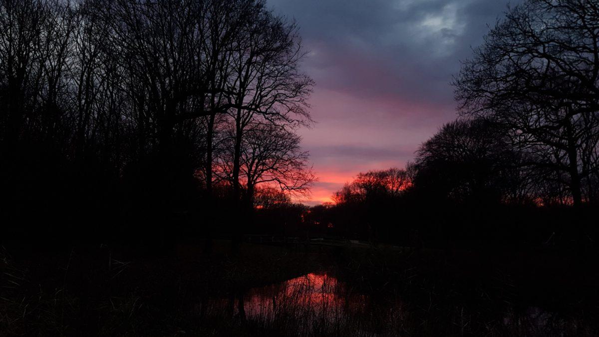 night, shadow, landscape, tree, dawn, sun, forest, sky, autumn, outdoor
