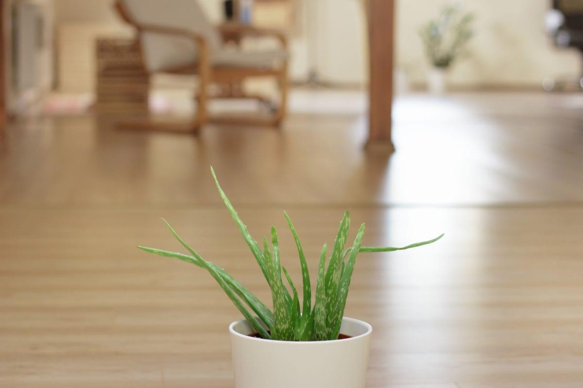 table, wood, pot, plant, floor, indoor
