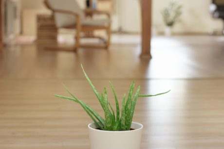 table, wood, pot, plant, floor, indoor