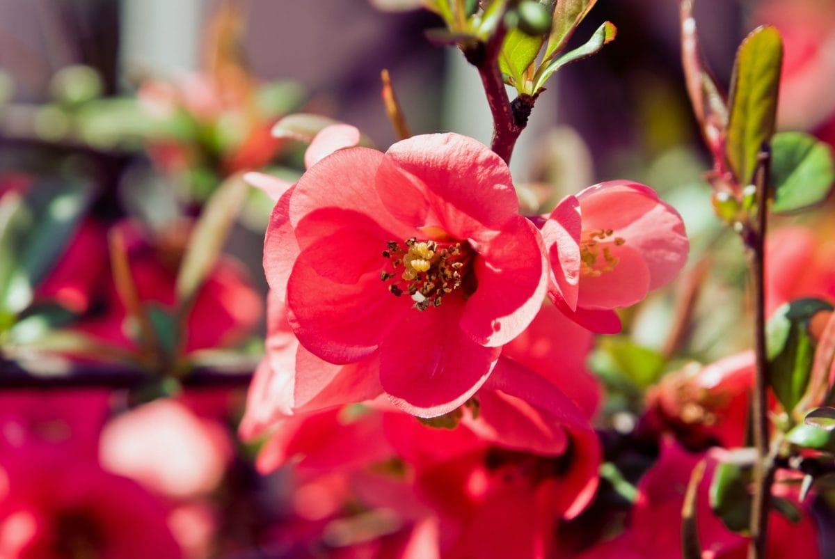 příroda, list, zahrada, květiny, rostliny, květy, okvětní lístek, květ