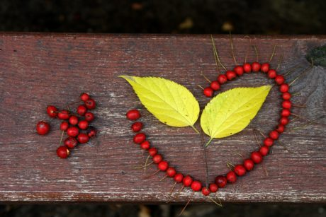 leaf, berry, wood, table, plant, decoration