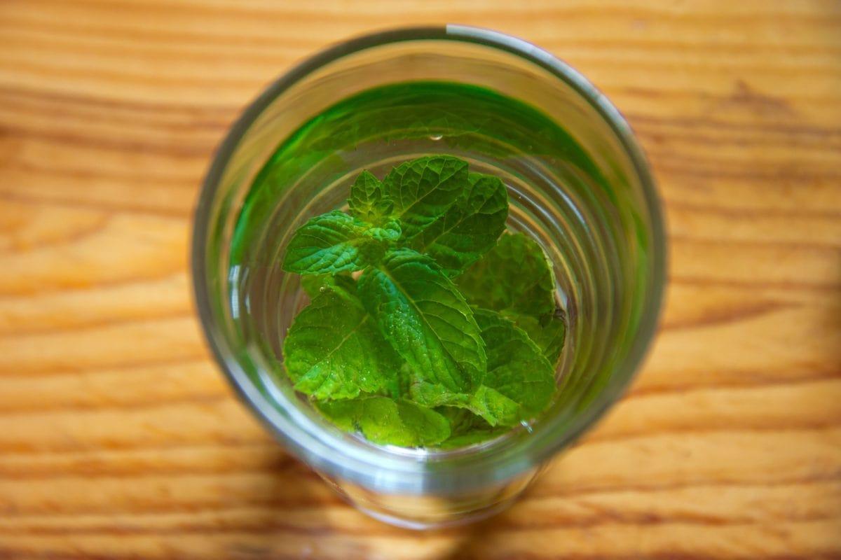 green leaf, tea, glass, herb, food, mint, drink, kitchen table, green, indoor
