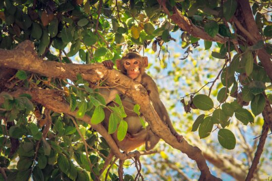 branch, nature, tree, leaf, monkey, primate, outdoor