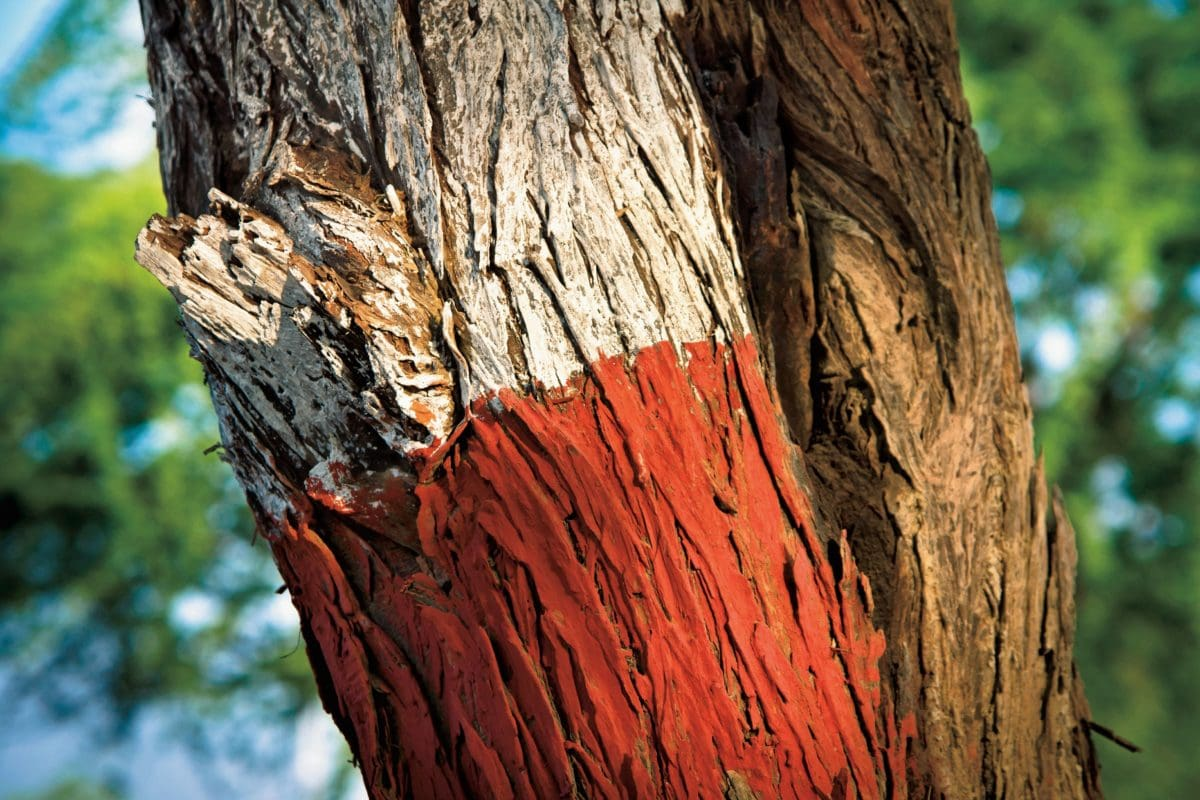 wood, nature, tree bark, sign, color, outdoor