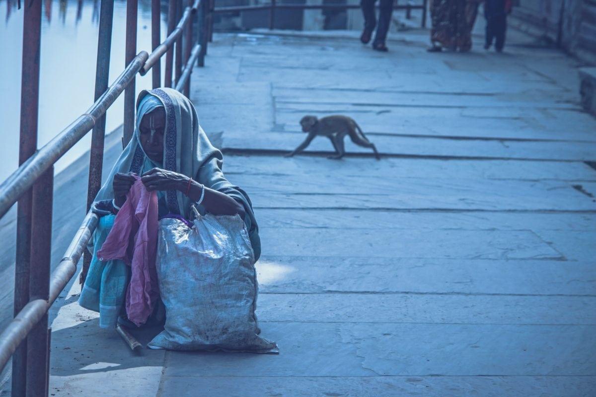 monkey, street, woman, city, old, animal