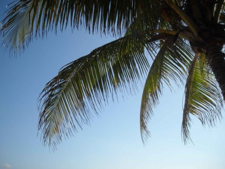 exotic tree, coconut, beach, palm, tree, blur sky
