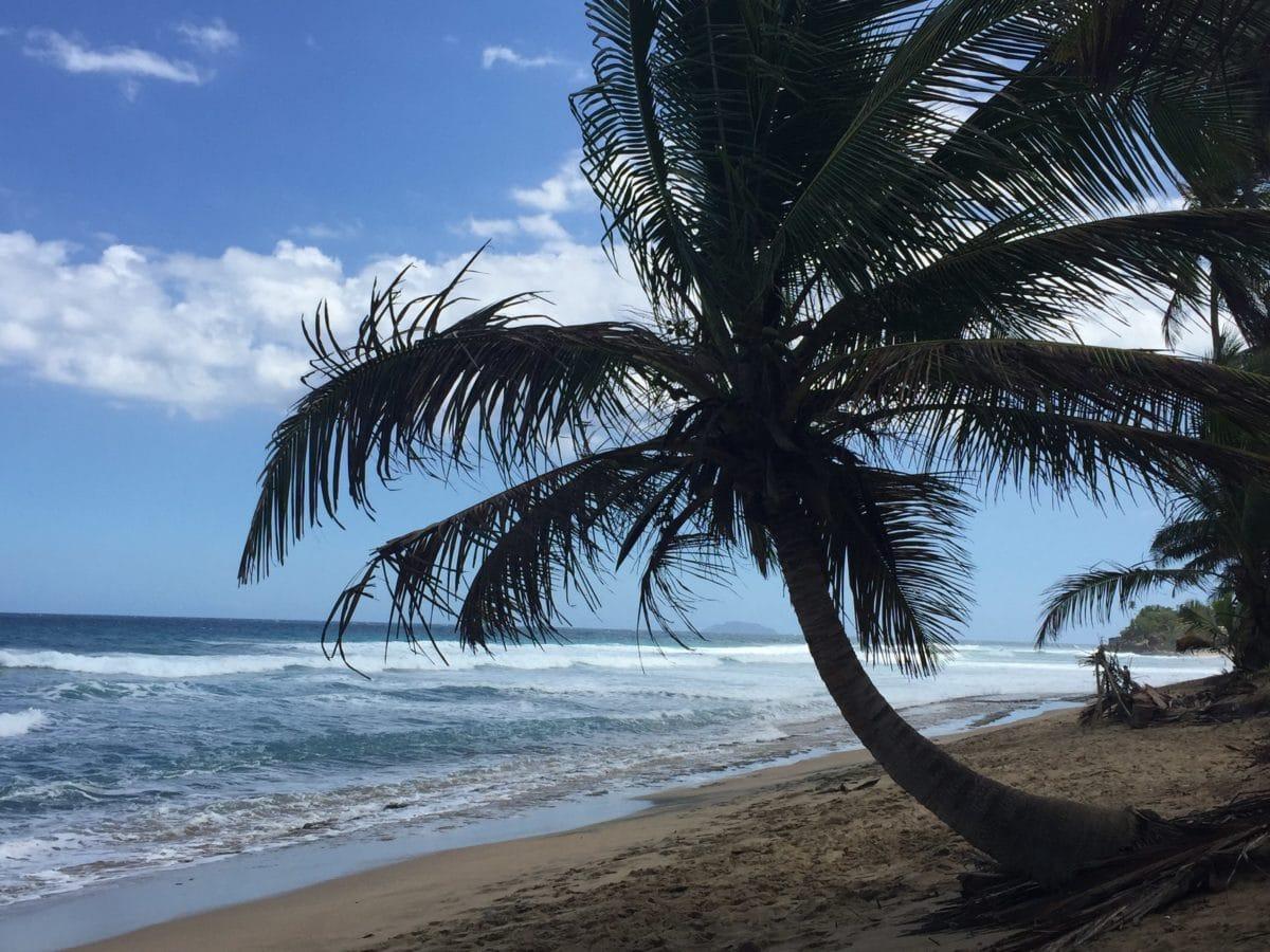 seashore, ocean, beach, summer, sea, water, sand, palm tree, sand, coconut