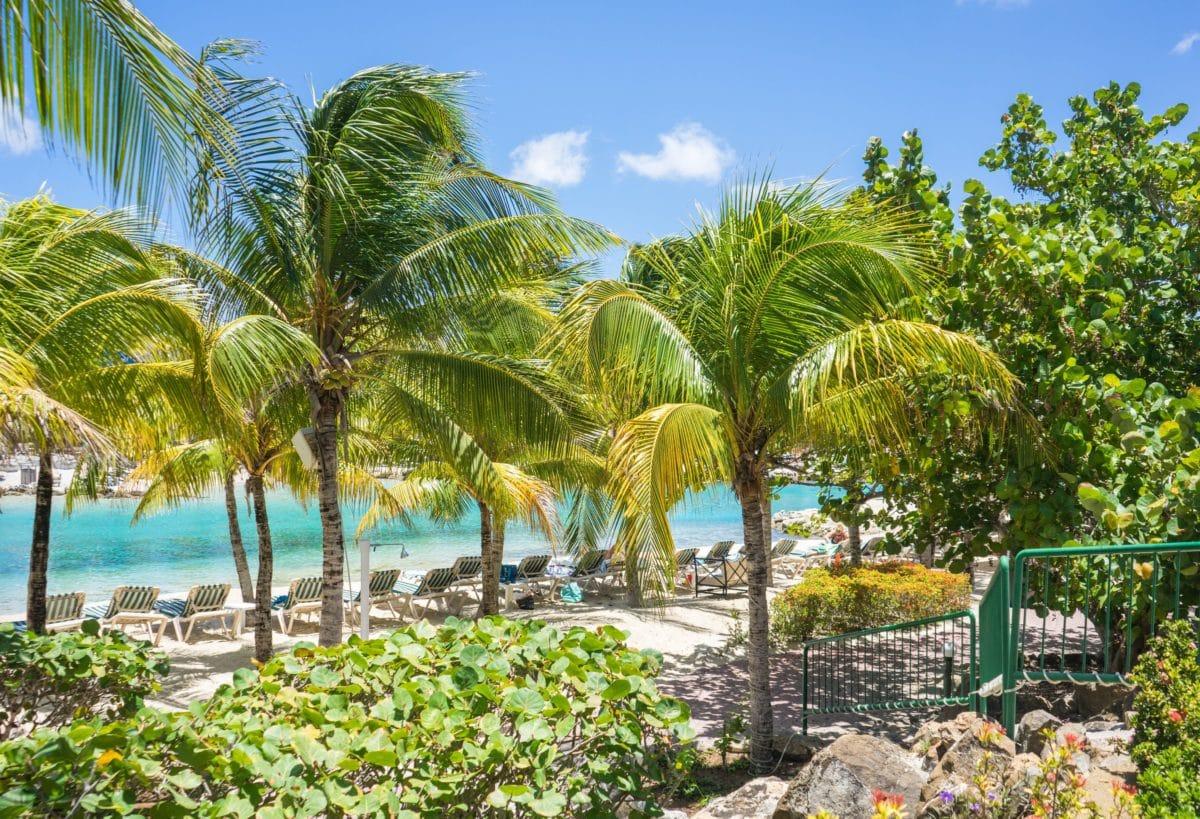 nature, beach, paradise, summer, palm, seashore, tree, coconut