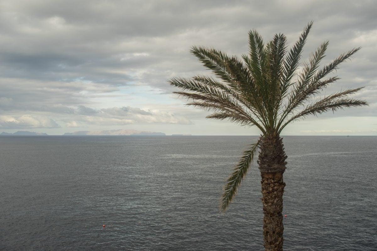 water, ocean, seashore, beach, sand, coconut, tree, palm