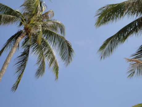 sun, coconut, blue sky, summer, exotic, tree, palm