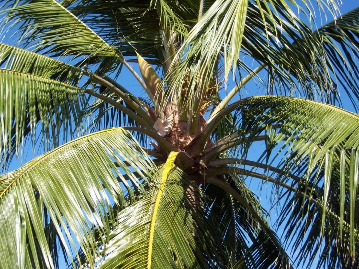 나무, 코코넛, 낙원, 야자수, 바닷가, 이국적인, 여름, 태양