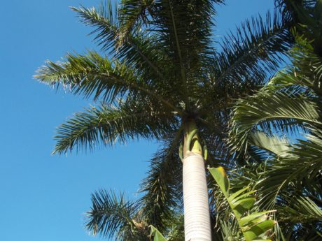 palm tree, coconut, palm, blue sky, outdoor, paradise