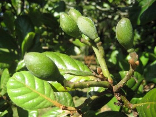 natura, copac, frunze verzi, sucursala, Herb, lumina zilei