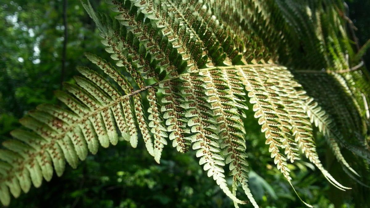 leaf, nature, tree, fern, plant, forest, shadow, daylight