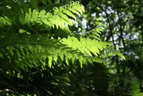 fern, summer, tree, environment, nature, leaf, plant, forest, shadow, daylight