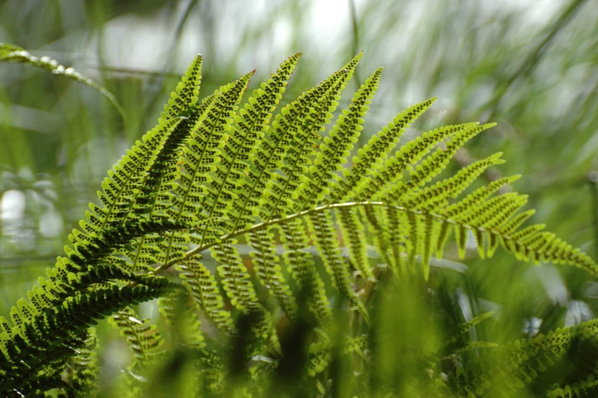 environment, summer, green leaf, nature, fern, plant, forest, tree, ecology