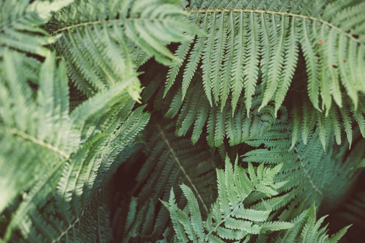fern, green leaf, nature, plant, forest, shadow, daylight