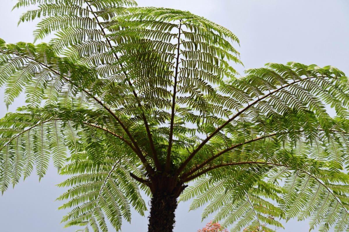 ต้นไม้, ใบ, ธรรมชาติ, ฤดูร้อน, เฟิร์น, สมุนไพร, ป่า, ใบไม้