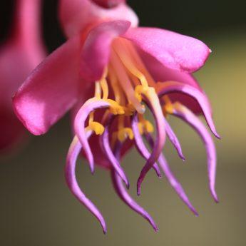 have, støvveje, detalje, blomst, natur, plante, kronblad