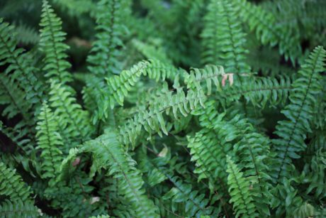 fern, nature, green leaf, plant, forest, shadow
