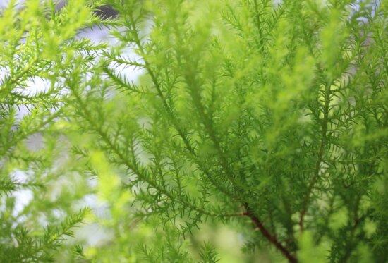 bregner, miljø, natur, blad, sommer, urt, plante